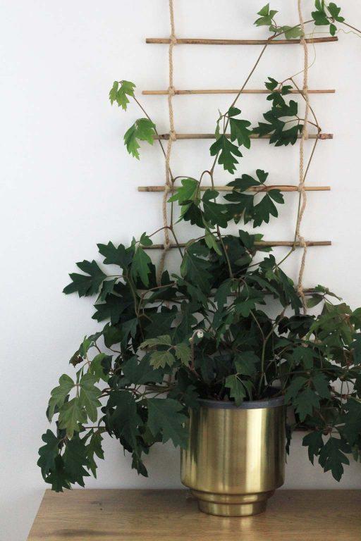 Diy Indoor Plant Trellis Indoor Plants Diy Trellis 640 x 480