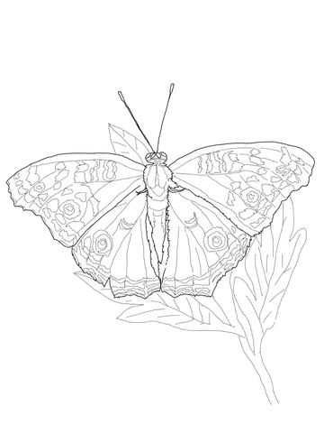 Owl Butterfly Coloring Page Coloring Pages Butterfly Coloring