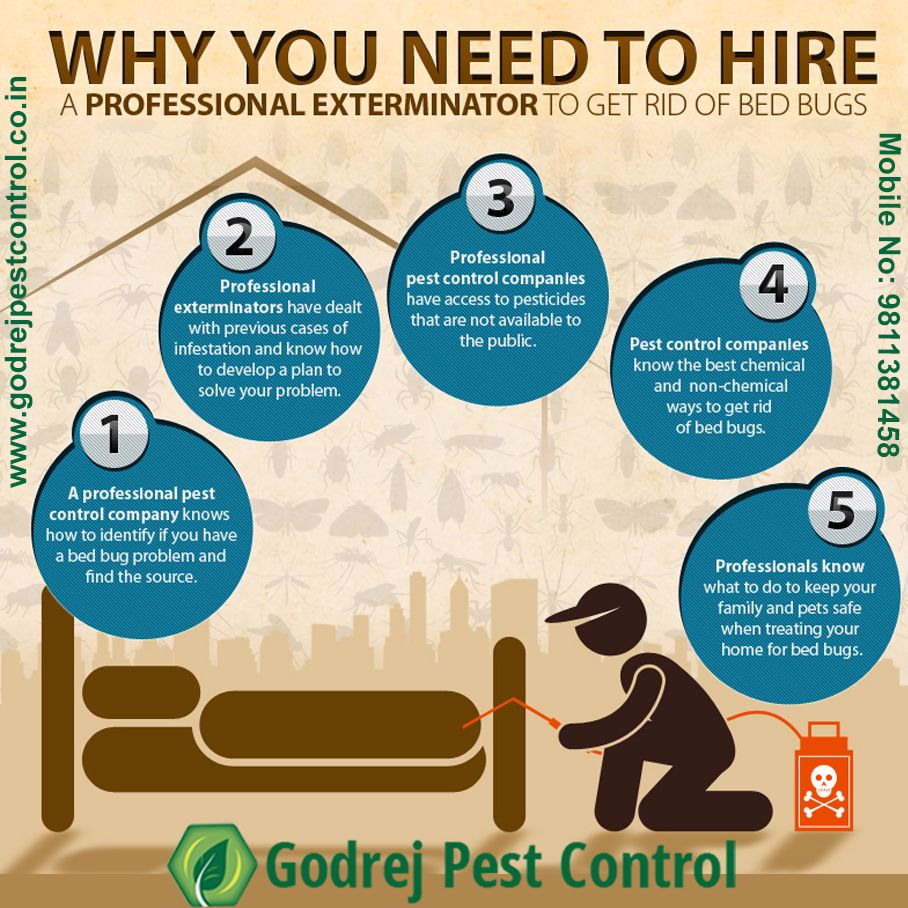 Hello Friends I Am Vivek Bharti Professional In Pest Control Want To Share Some Effective Pest Control I Best Pest Control Pest Control Pest Control Services
