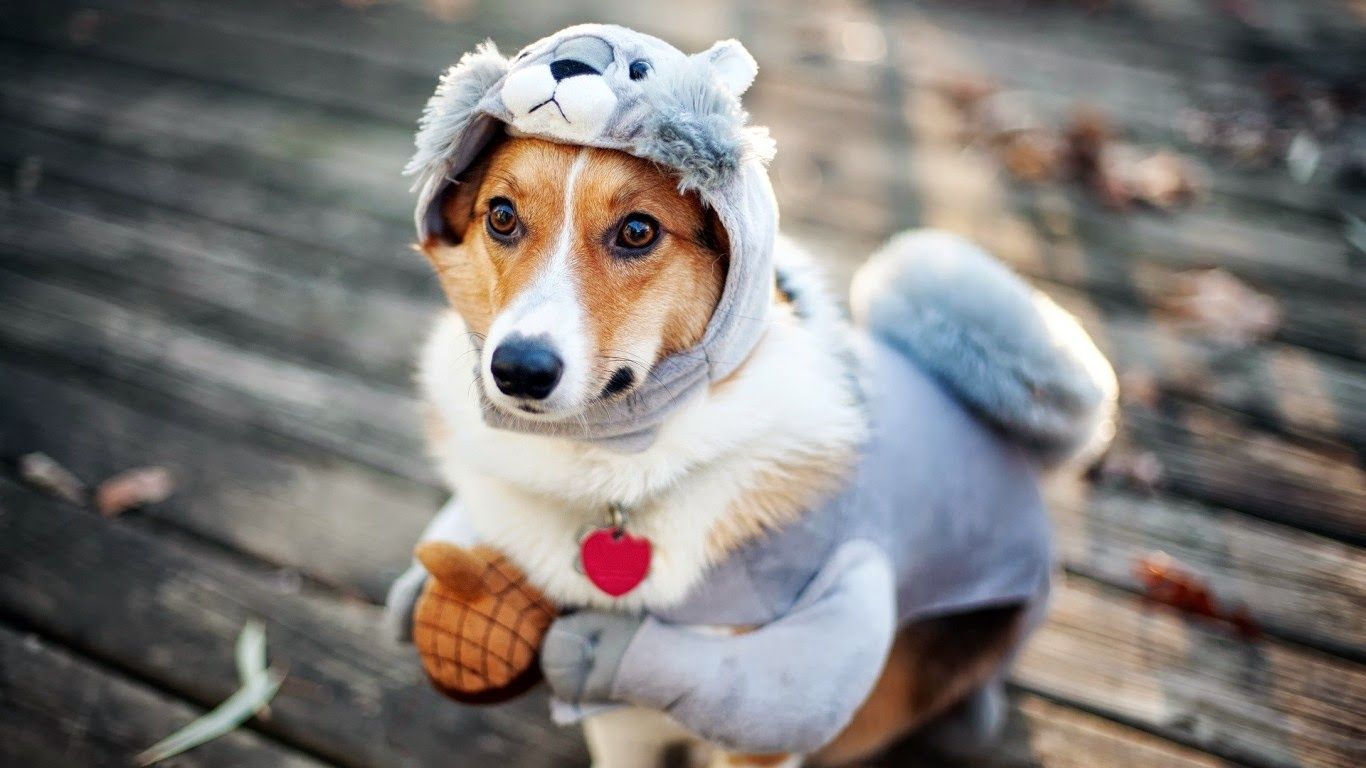 Amazing Pet Anime Adorable Dog - cf7ce21173ee1d9d0da07c0286a3154b  Collection_68569  .jpg