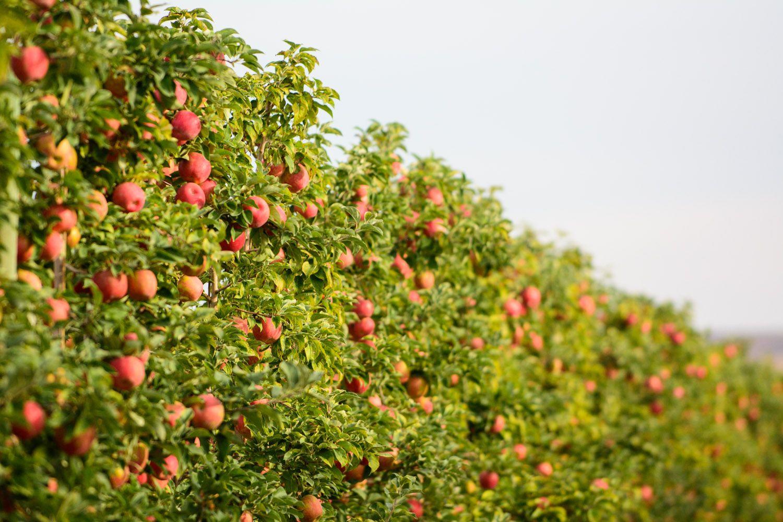 Pin by Stemilt Growers on Farming & Family | Apple crisp