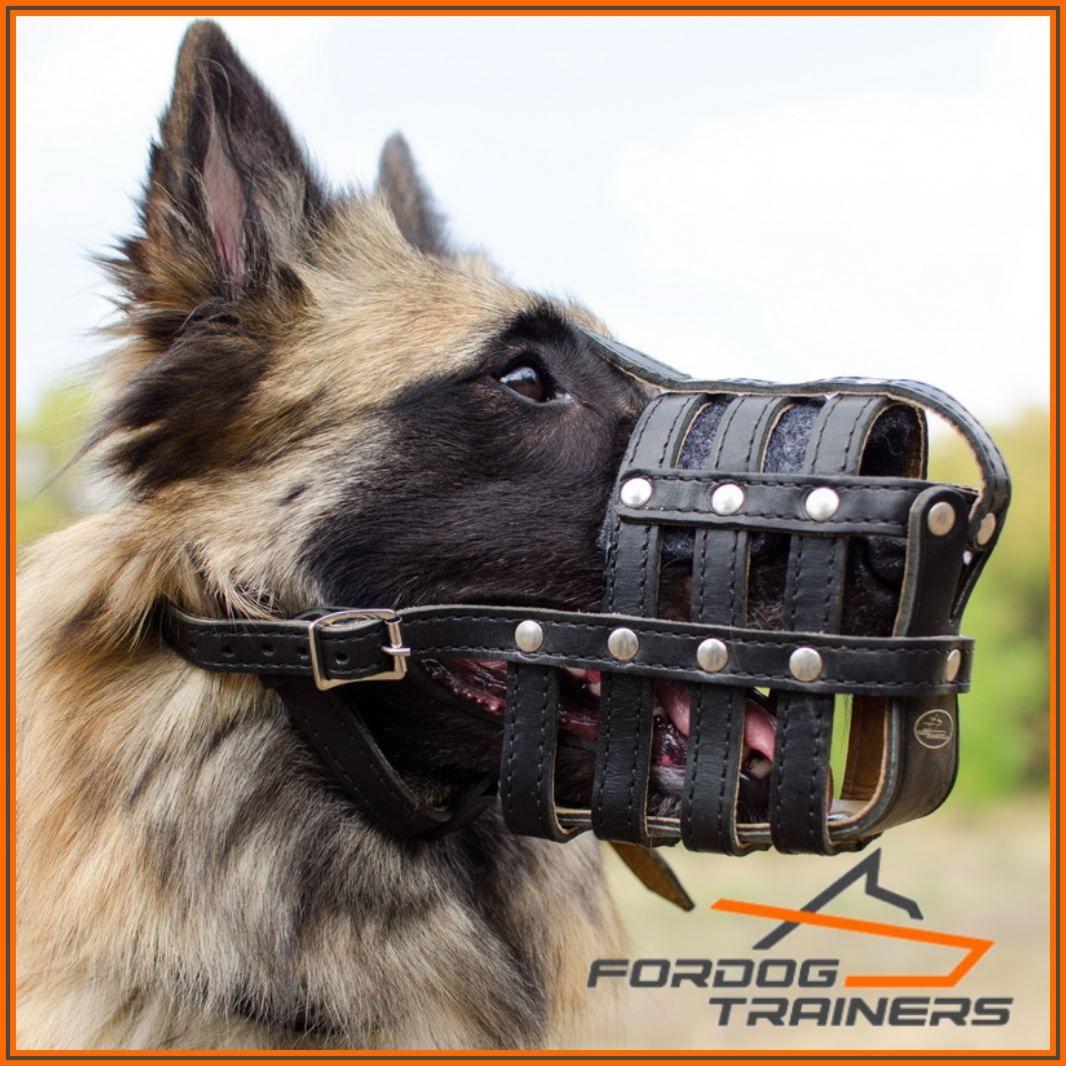 Pin on Kaganiec skórzany dla psów rożnych ras