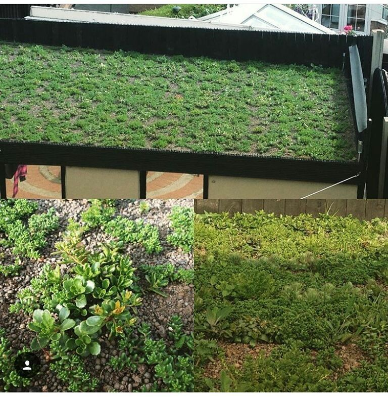 Unbelievable to think this green roof  has gone from almost bare to this in a month and a half would love to do more of these projects #green #greenroof #sustainability #sustainable #sustainableliving #sustainabledesign #design #architect #landscape #landscapearchitect #landscapearchitecture #sedum #retrofit #student #uk #leeds #eco #landscape #landscapearchitecture hitecture #landscapearchitect Re-post by Hold With Hope
