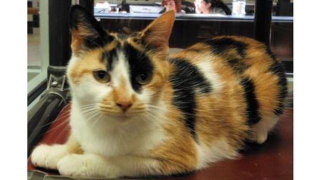 Adoptable cats for March 8