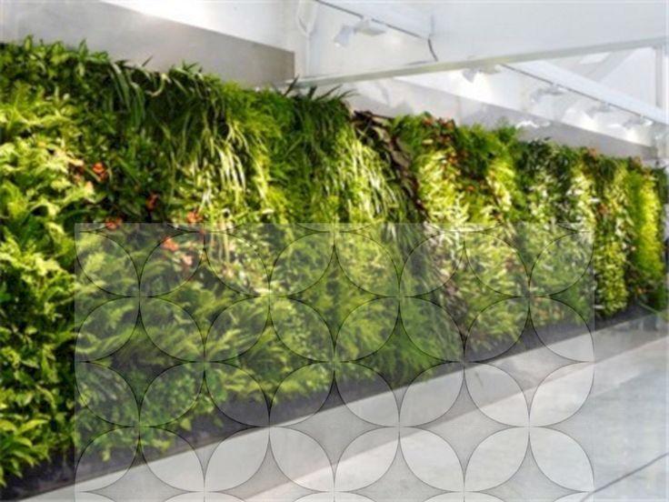 16 überraschende Pflanzen Dekor Sukkulente Ideen #sichtschutzpflanzen