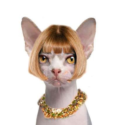 Hilarious High Fashion Fusions Cats Animals Hairless Cat