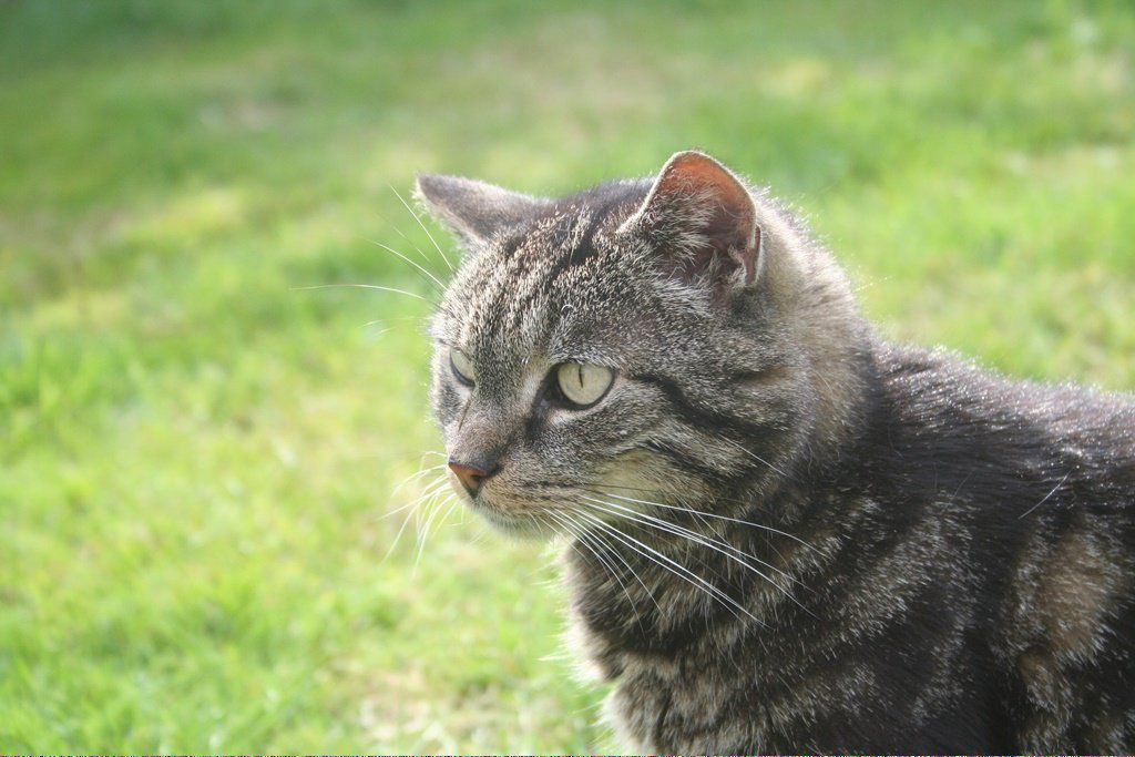 Cats Craigslist Gocats Referral 653930723 With Images Cat Vs Dog Cats That Dont Shed
