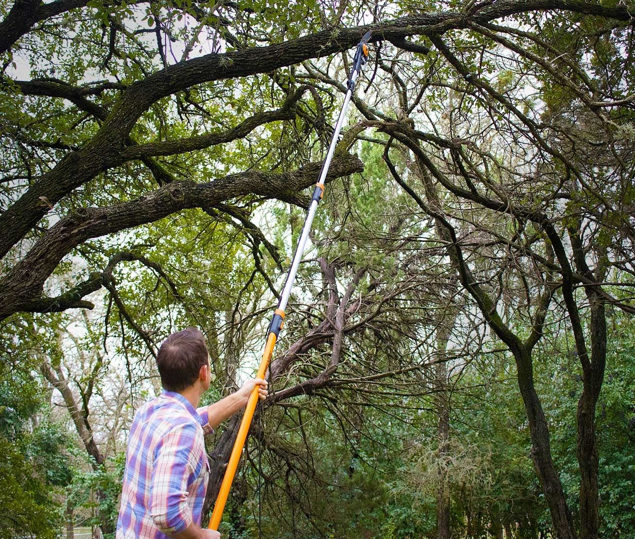How To Prune Overgrown Trees With