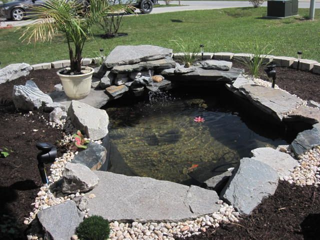 Pin By George Powell Iii On Pond S And Fish Tanks Small Backyard