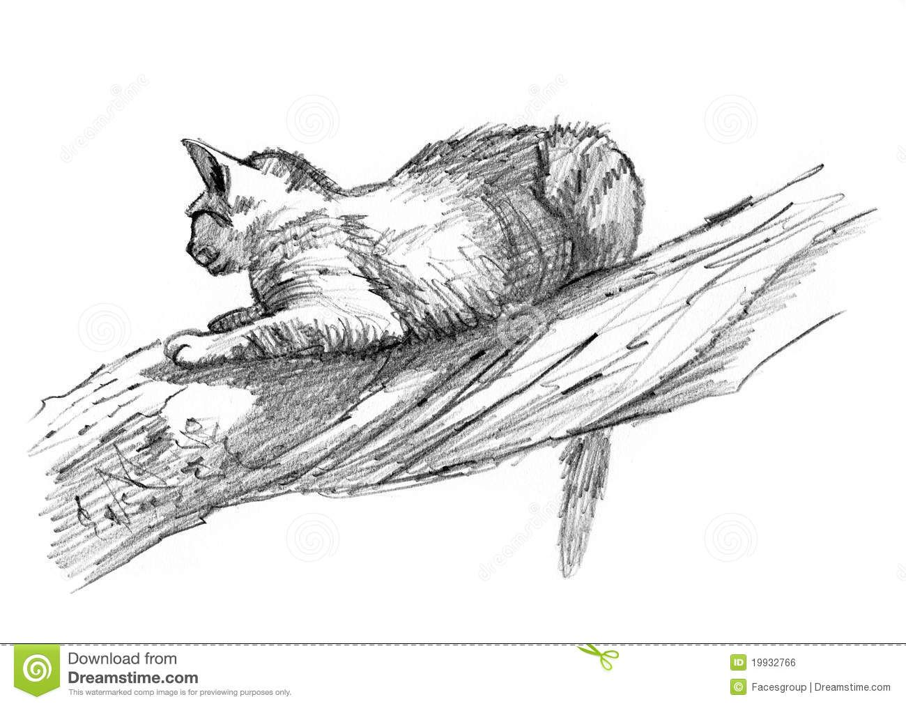 sand cat drawing sketch on a tree by facesgroup via dreamstime