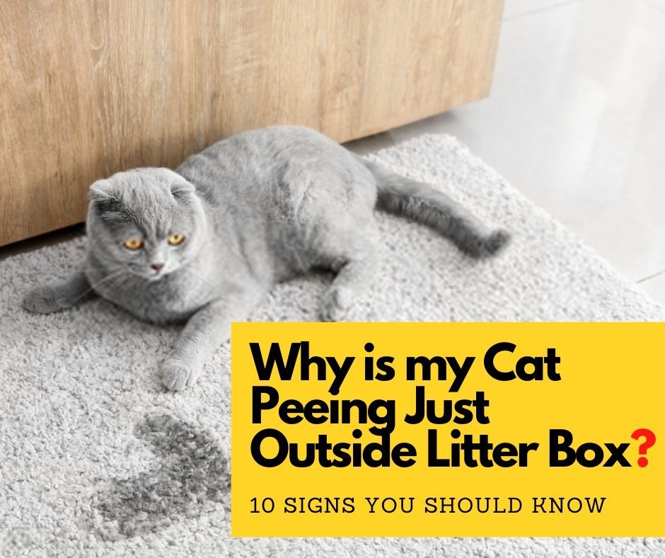 Pin on Cat's Behavior