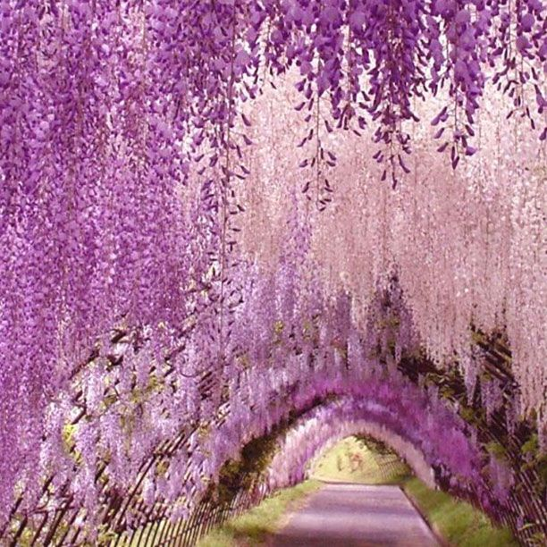 Beautiful Places In Japan Tumblr: One Of The Most Beautiful Places In The World Is The