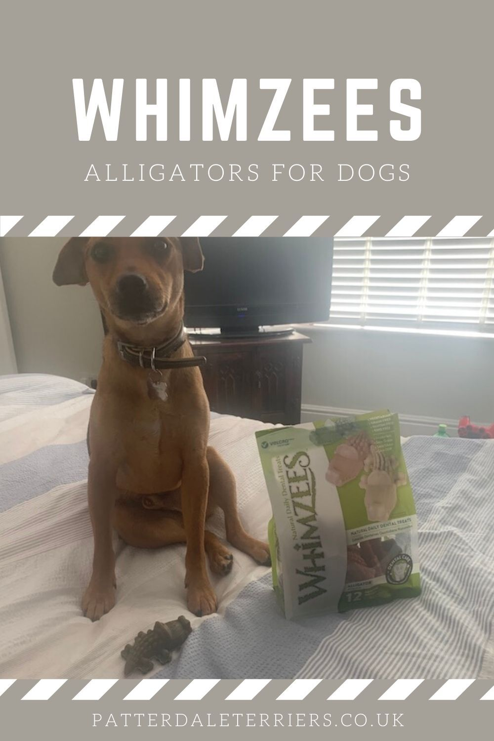 Pin on Must Have Dog Products
