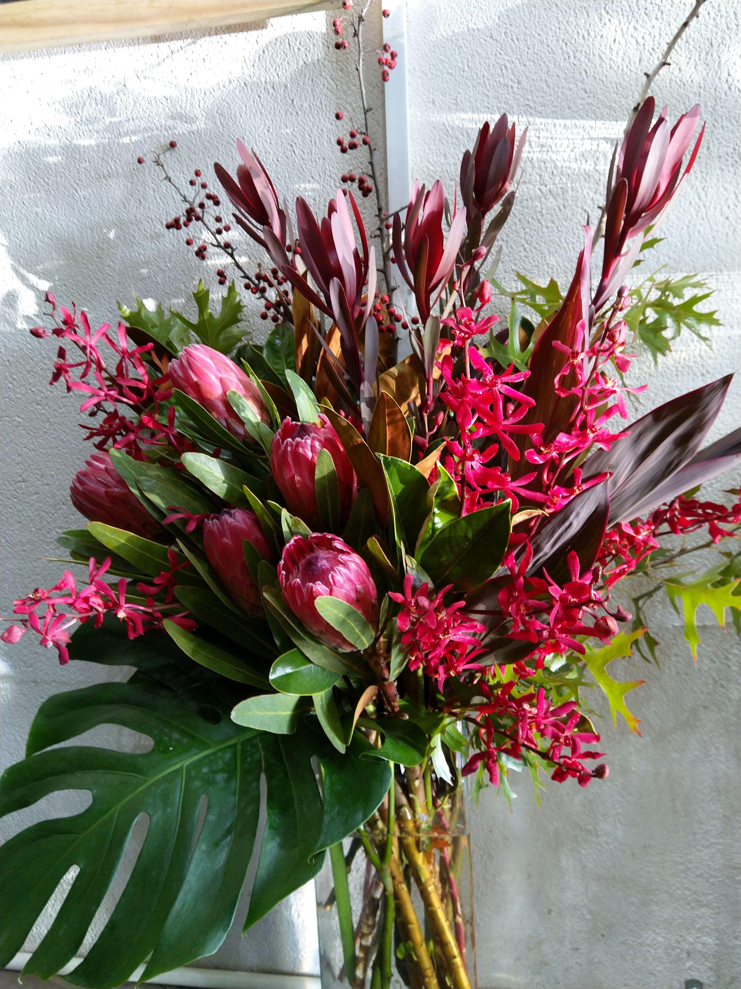 What A Beauty Flower Of Protea Australian Native Flowers Flower Beauty Flowers