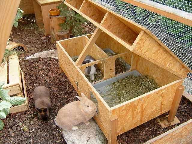 Kaninchen Info Aussenhaltung Die Schutzhutte Kaninchen Kaninchenhaus Meerschweinchenstall