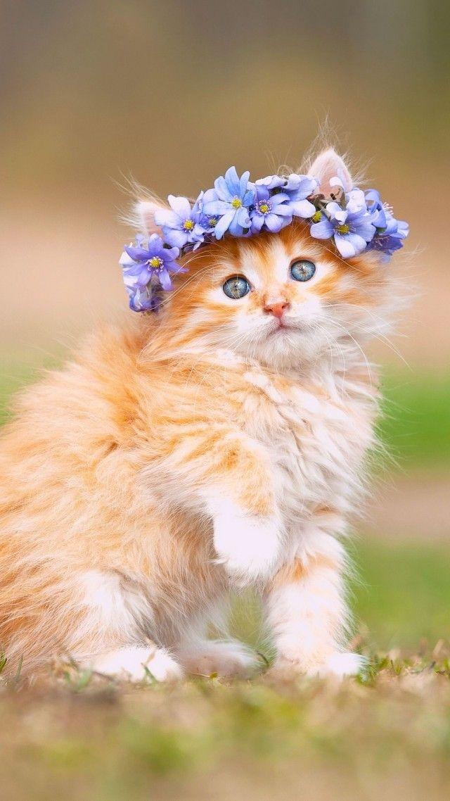 Cute Kitten With Adorable Flower Crown Kittens Cutest Cute Cats