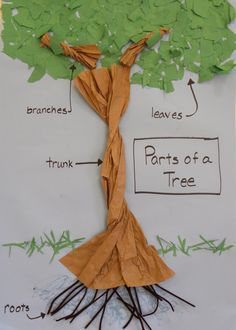 Image result for tree parts preschool | Creative curriculum ...
