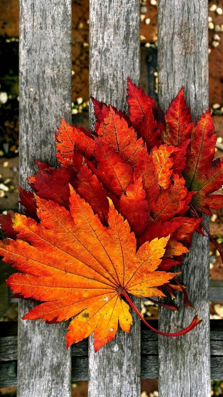Download Autumn leaves Wallpaper by Agaaa_K 0c Free on
