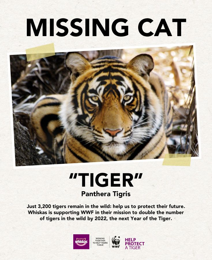 Just 3,200 tigers remain in the wild today share our