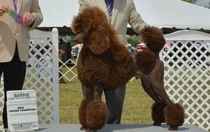 Can Gch Graphic Jackson Browne Owner Leslie Wright Les