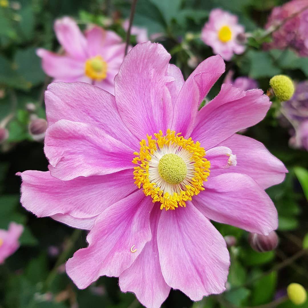 Sommer Garten Blumen Bremen Hobby Garten Sommer