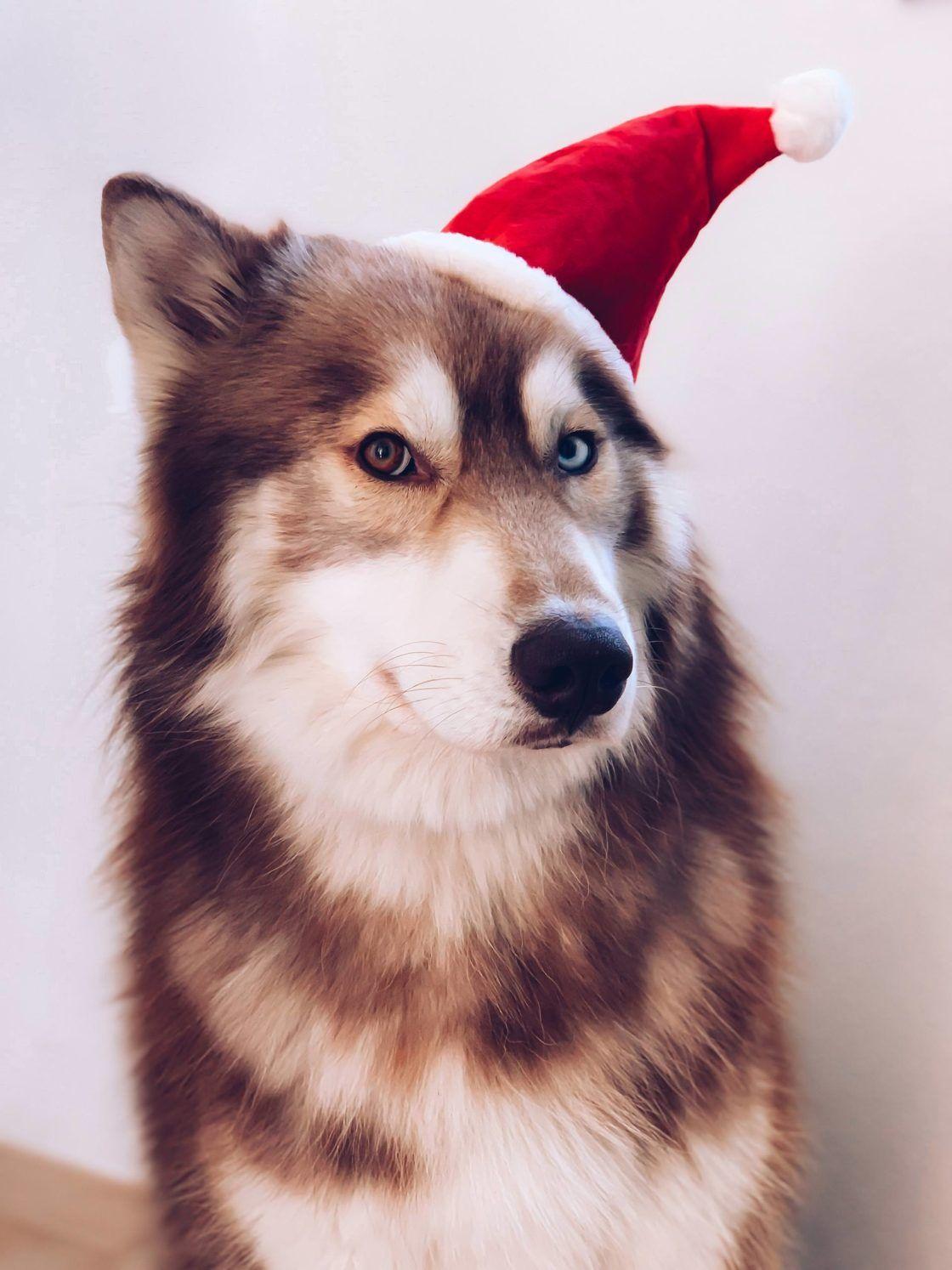 Enthalt Unbeauftragte Werbung Weihnachtsgeschenke Fur Hunde Weihnachtsgeschenke Fur Hundebesitzer Weihnachtsgeschenke Fur Hundef Weihnachtsgeschenke Fur Hunde