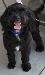 Corey Is An Adoptable Shih Tzu Dog In Albany Ny Corey Is A