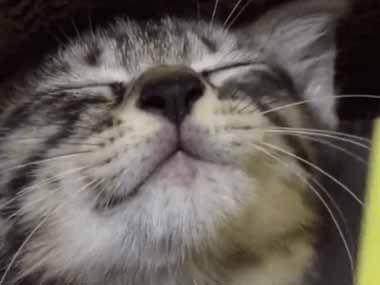 子ネコの顔をクシで「なでなで」してみた → とっても気持ちいいようですw : 猫の動画 ねこわん!