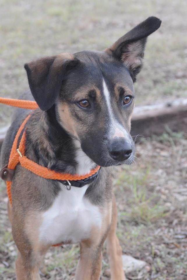 Adopt Finn on Lake animals, Animals, Animal shelter