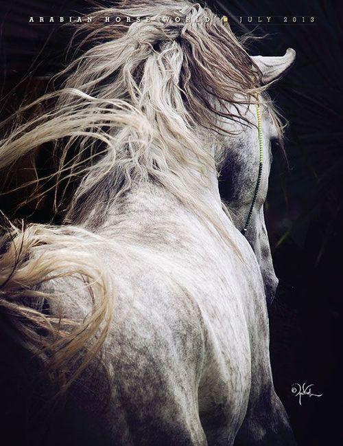 [CasaGiardino]  ♡  horses