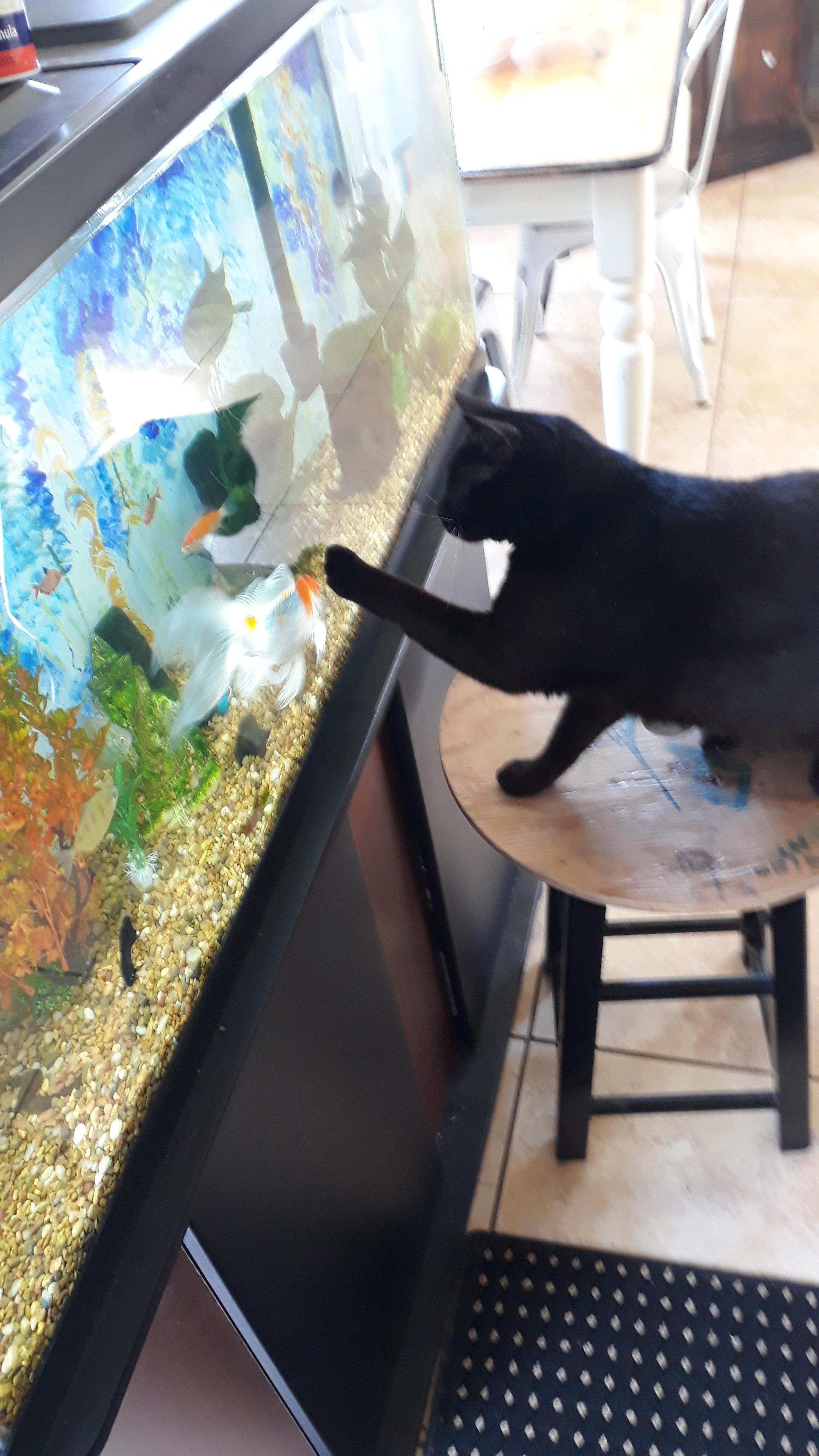 Zangief Looking At My Mother S Aquarium Aquarium Cats Kitty