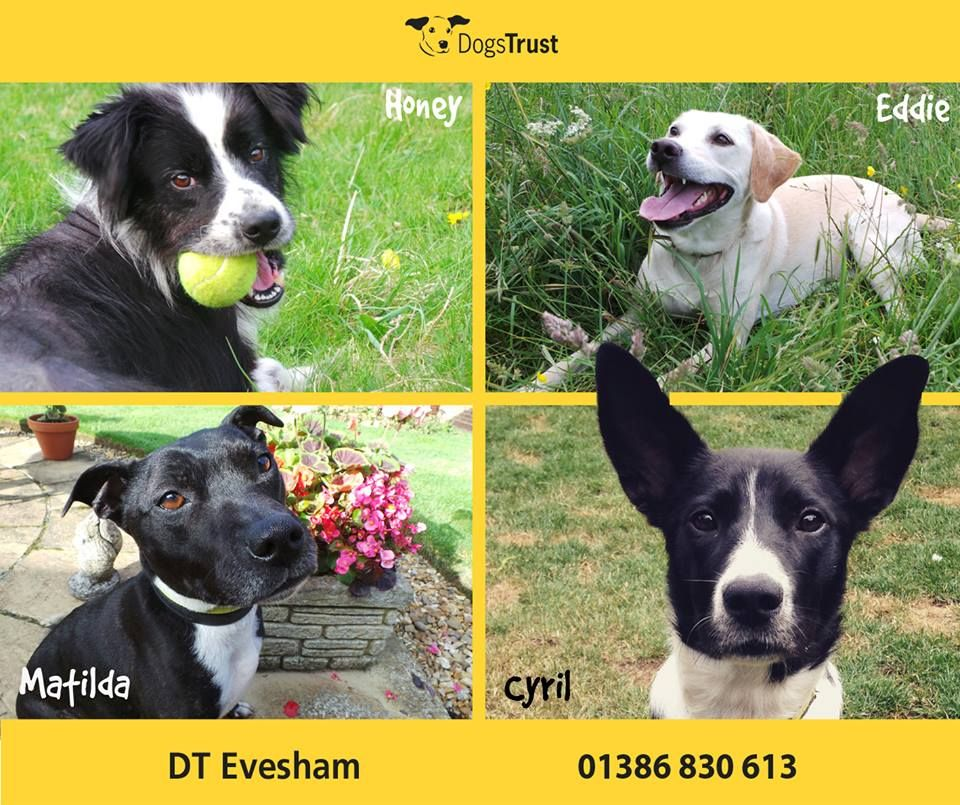 These Lovely Four At Dogs Trust Evesham Are Currently In Foster Homes But Are Looking For Their Forever Homes Dogs Trust Dog Waiting Rescue Dogs