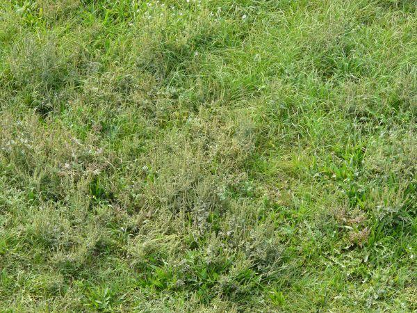 tall grass texture seamless. Long Grass · Earth TextureSeamless Tall Texture Seamless A