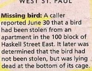 25 Funny Newspaper Articles | Only In The News | Funny