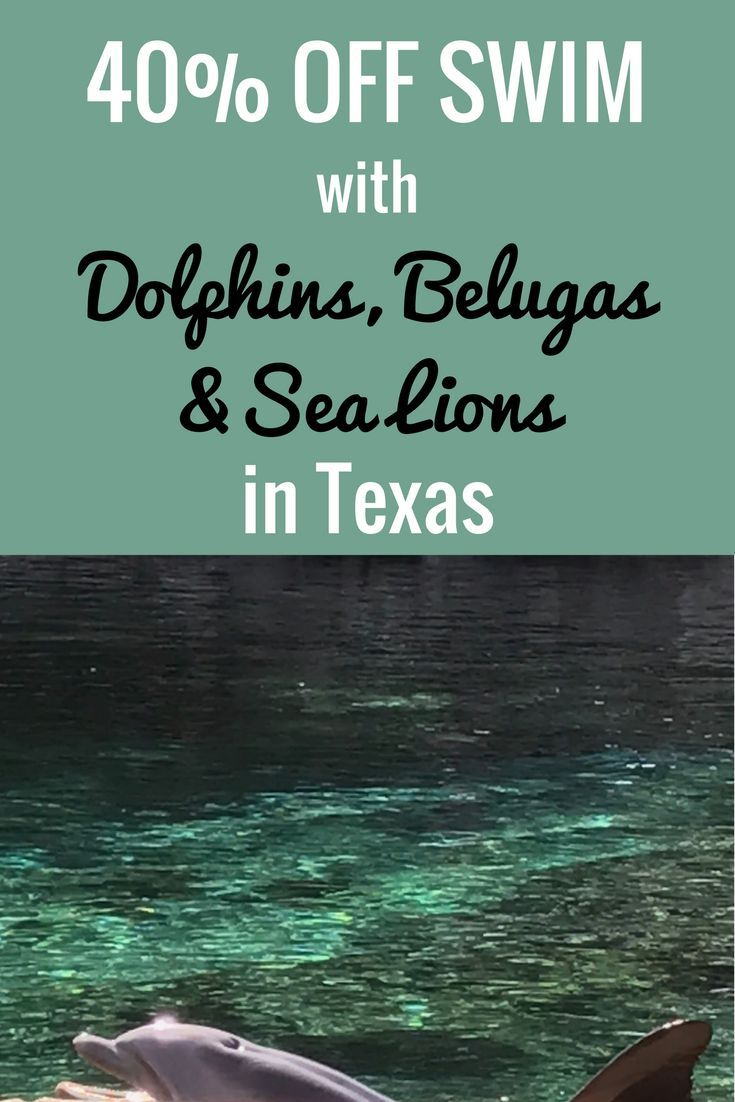 40% Off Swim With Dolphins, Belugas, Sea Lions In Texas