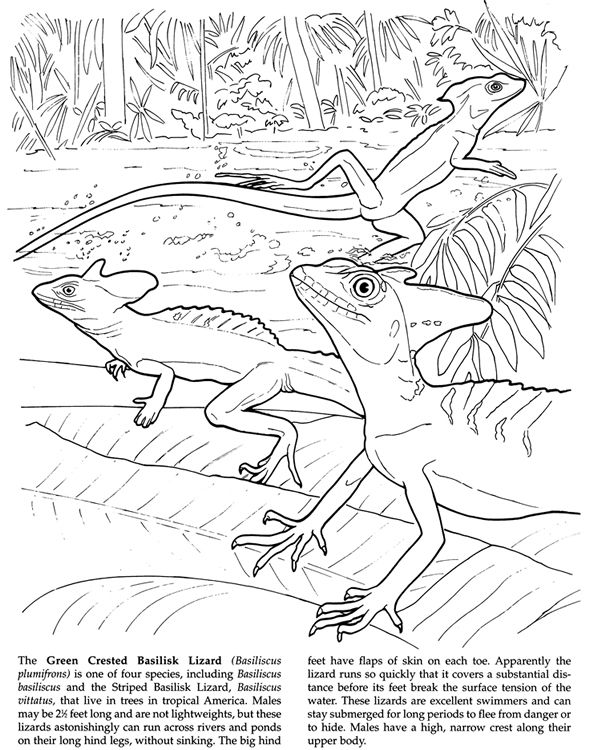 Amazing Animals Coloring Book By Ruth Soffer Dover