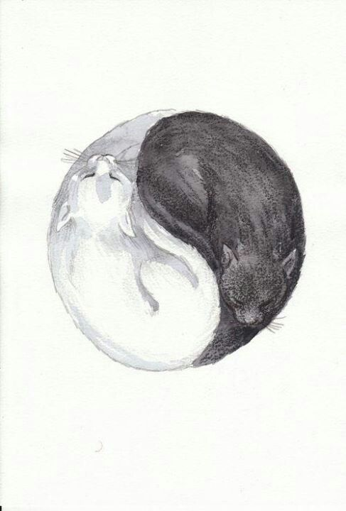 Idea For Cat Tattoo But Mine Would Be An Orange Cat And A White Cat Cat Tattoo Cat Art Cat Drawing