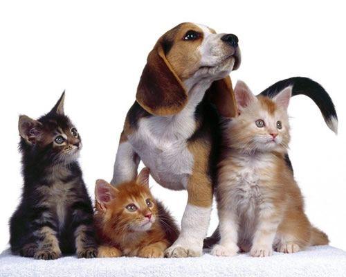 Cómo ahorrar en el gasto de nuestra mascota - http://gd.is/pLPH8H