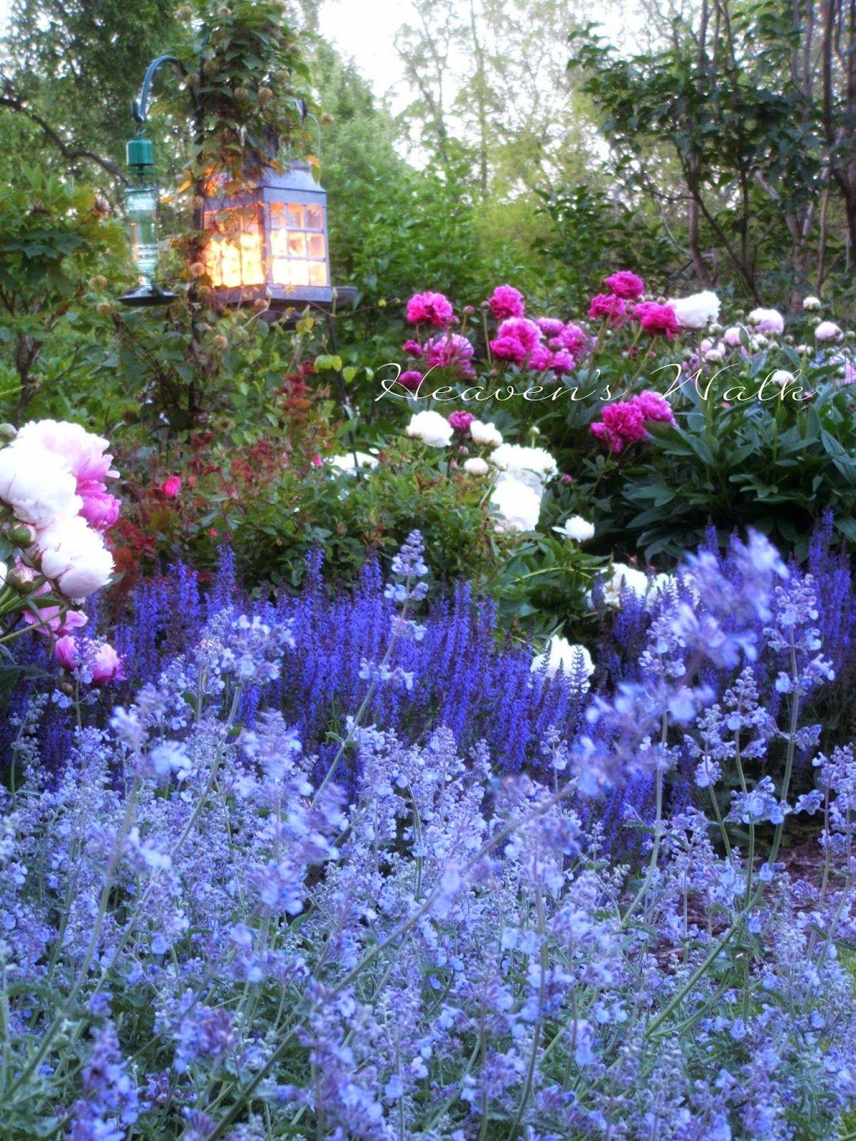 Heaven's Walk: When Peonies Bloom