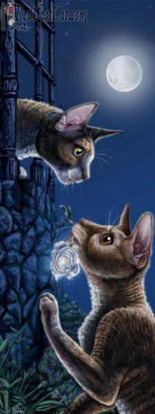 Romantic cat paintings. Tamara Meezer Gale