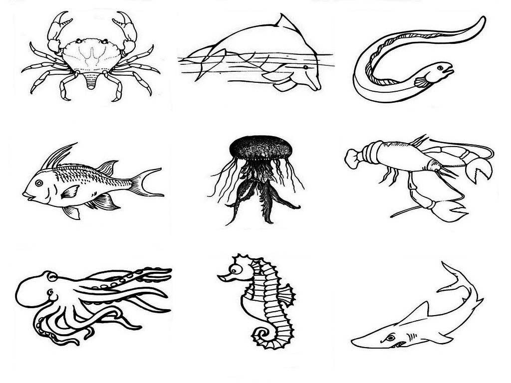 Animales Marinos Para Colorear Pintar E Imprimir Pre K