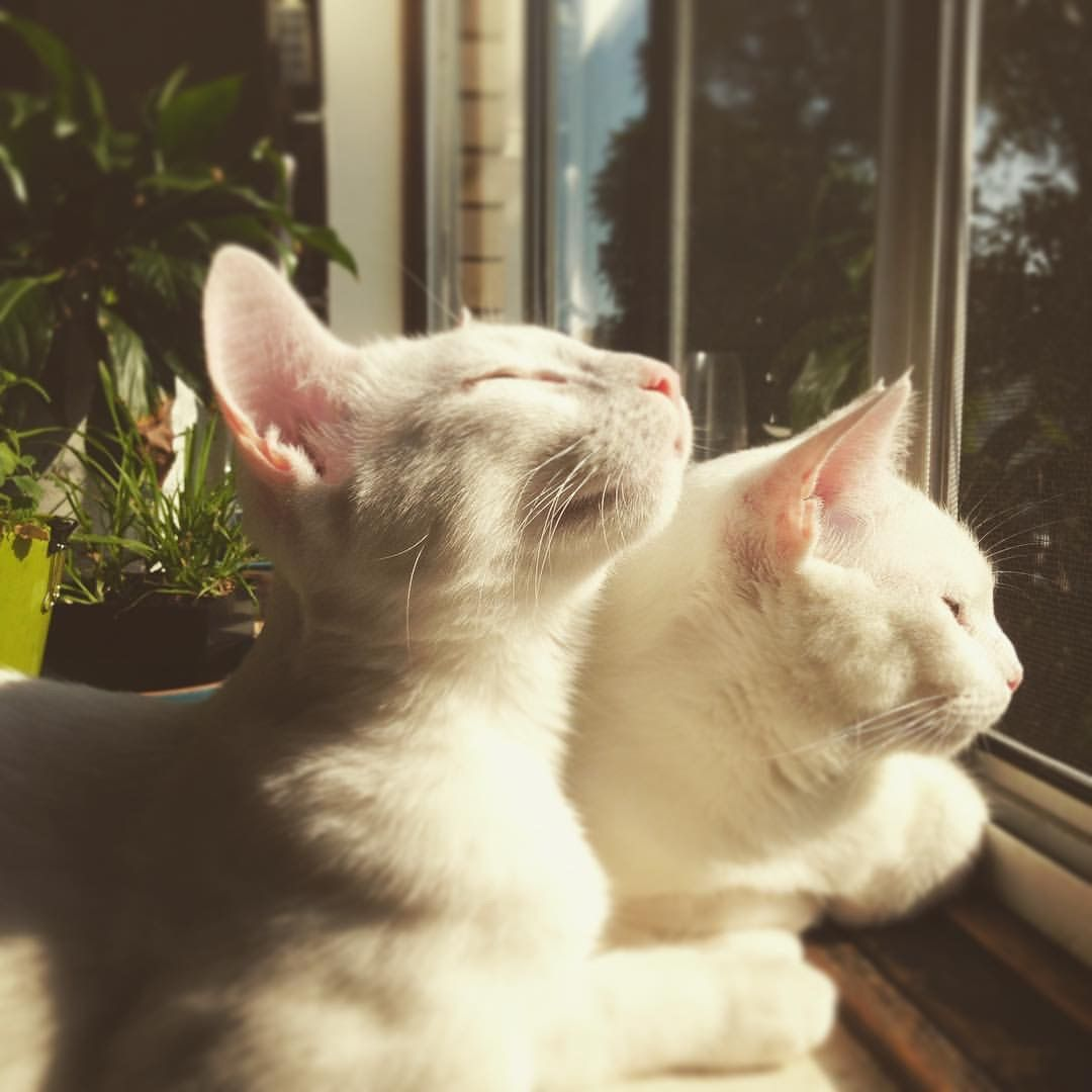 This Photo Of My Friends Cats This Morning Gorgeous R Aww Cat Aesthetic Cute Animals Pretty Cats