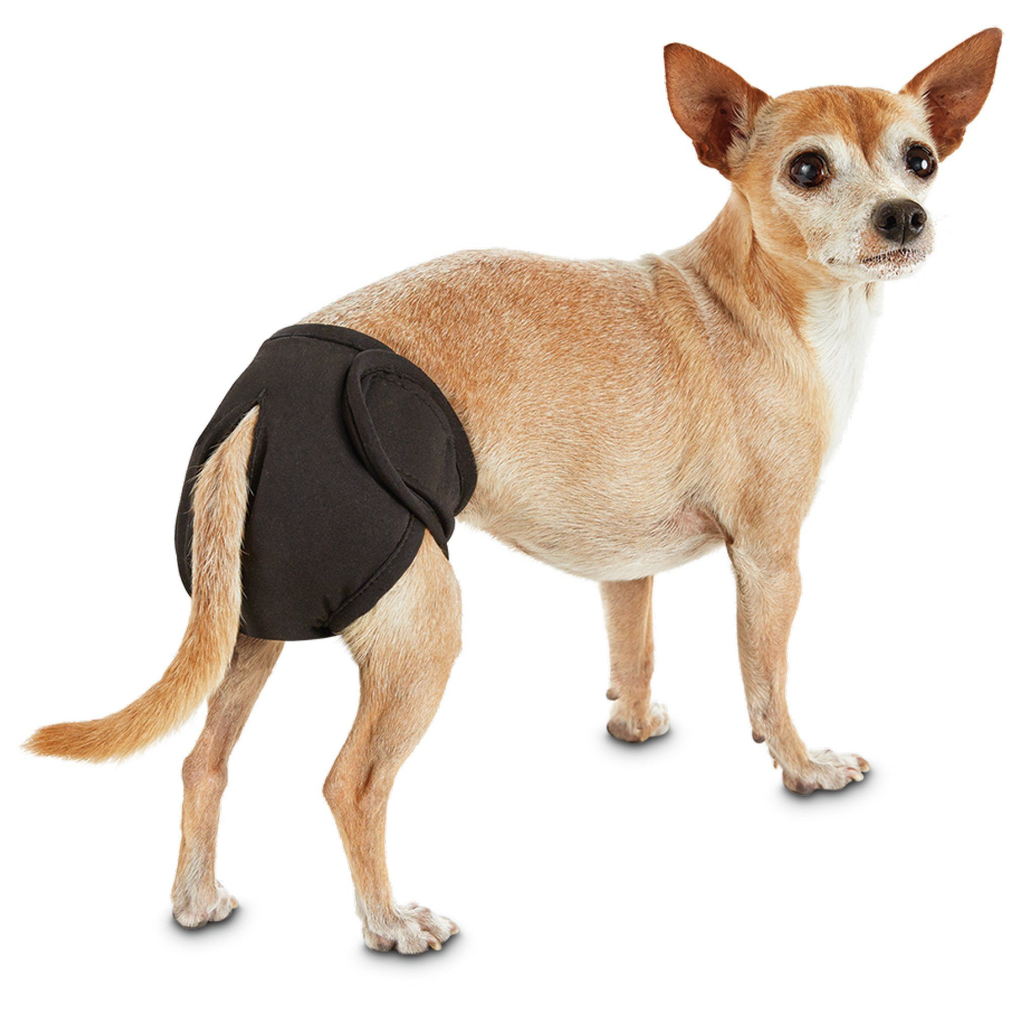So Phresh Washable Diaper For Dogs X Small Dog Diapers Dog In