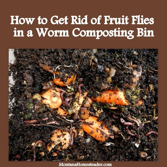 How to get rid of fruit flies in a worm compost bin how for Getting rid of stuff minimalist