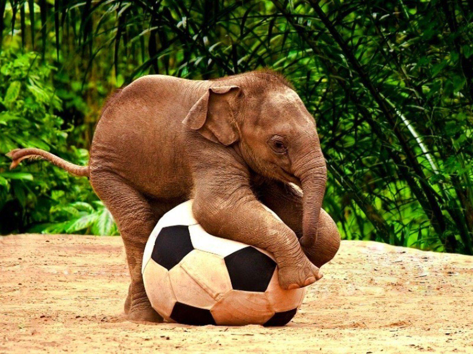 animals wildlife elephants baby elephant christmas globes football
