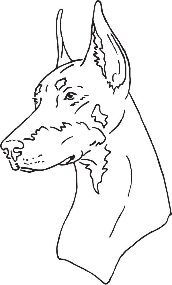 Outline Vector Doberman Yahoo Search Results Image Search