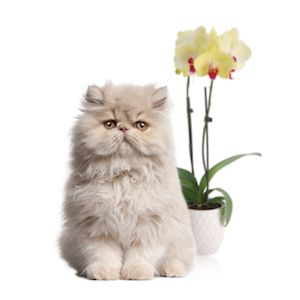 Your feline friend can wreak havoc on orchids. Click here to learn three ways to help your plant and pet coexist.