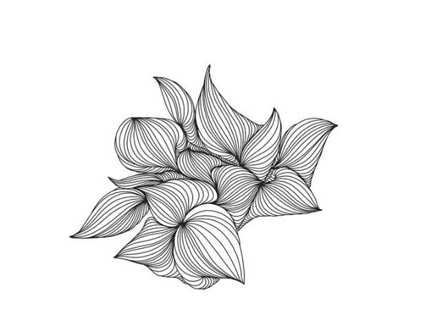 Black Line Flower Drawing : Free images tree branch black and white leaf flower wind