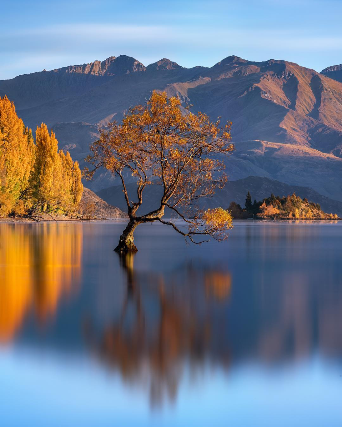 Fantastic view of the Wanaka Tree. | Photo by Chrystal Hutchinson (@midnight_photography on IG)