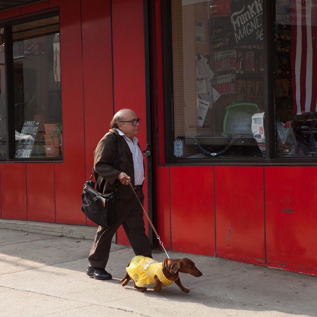 Danny Devito And His Dachshund Dachshund Lovers Dachshund